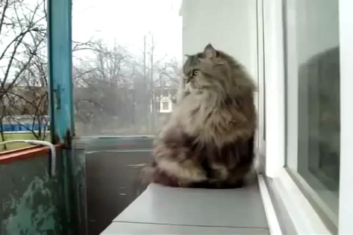 Кот гуляет на балконе - youtube.