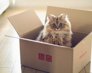 Кот из коробки